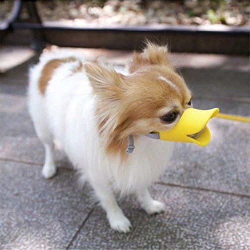 chihuahua-in-duck-dog-muzzle