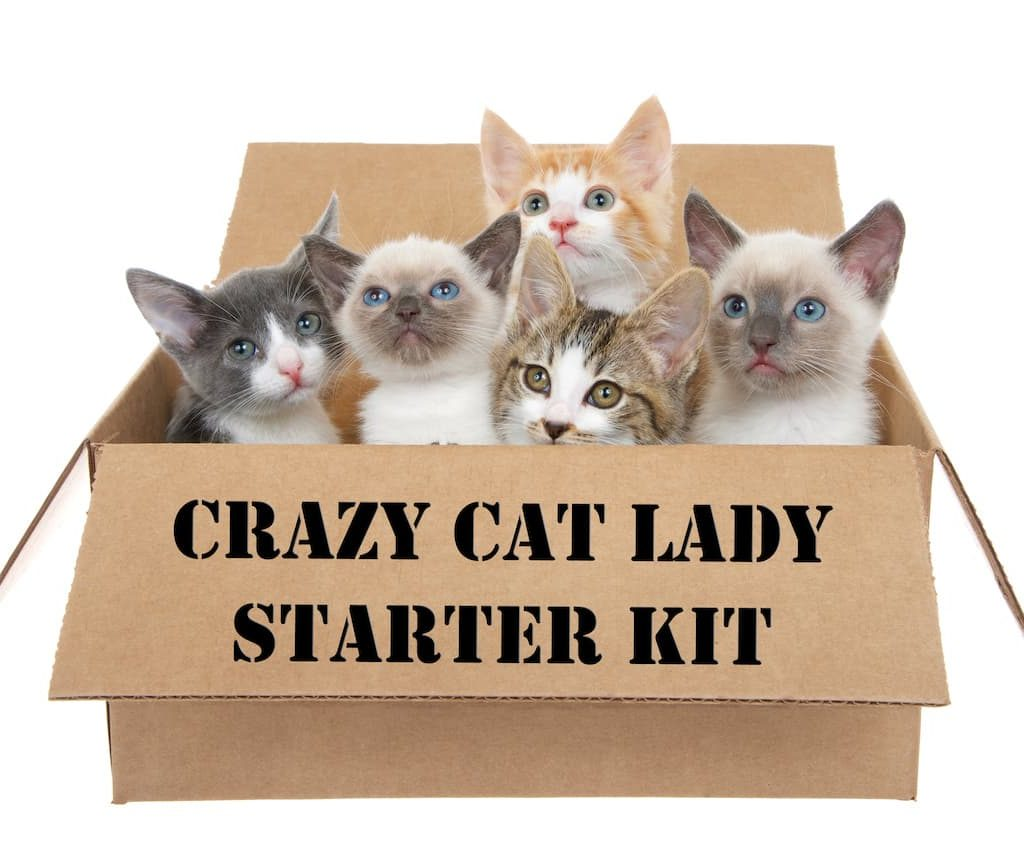 The Crazy Cat Lady Action Figure 8