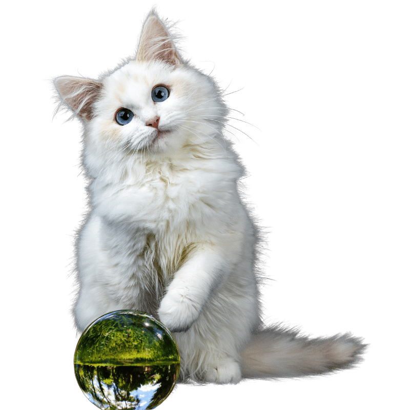 The Magic Crystal Ball for Pets 2