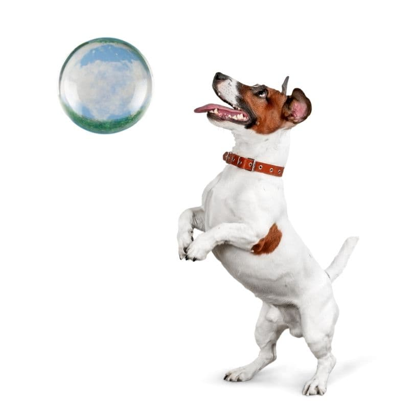 a dog using a magical crystal ball