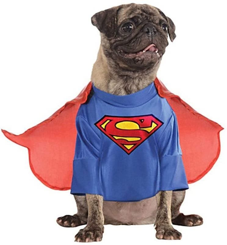 The Superman Dog Costume 7