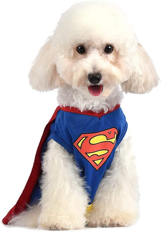The Superman Dog Costume 4