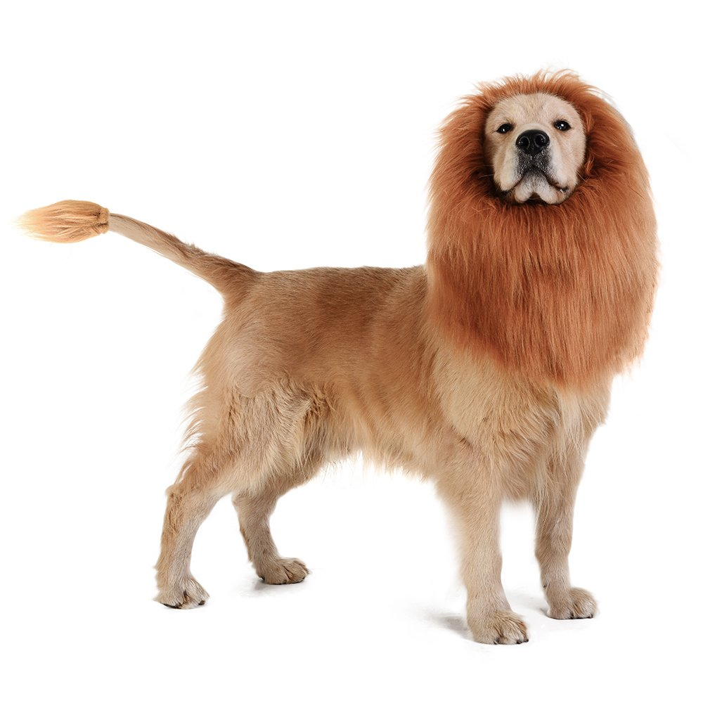 The Lions Mane For Dogs