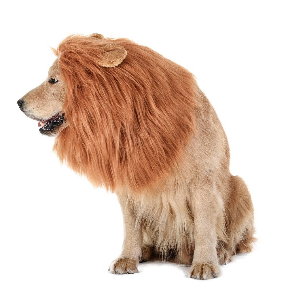 The Lions Mane For Dogs 3