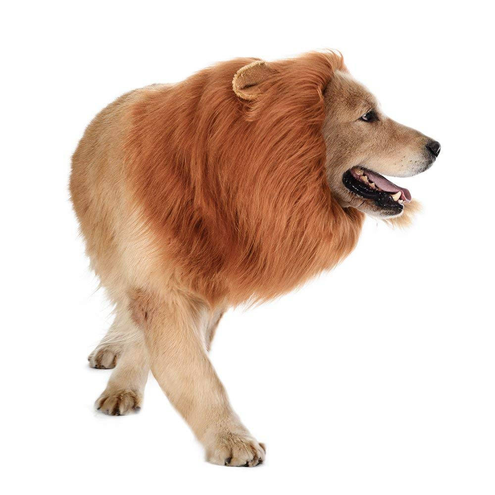 The Lions Mane For Dogs 2