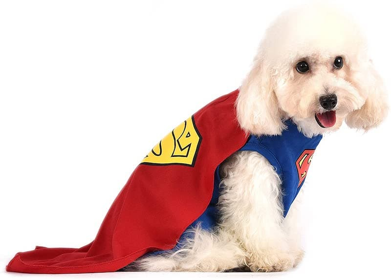 The Superman Dog Costume 5