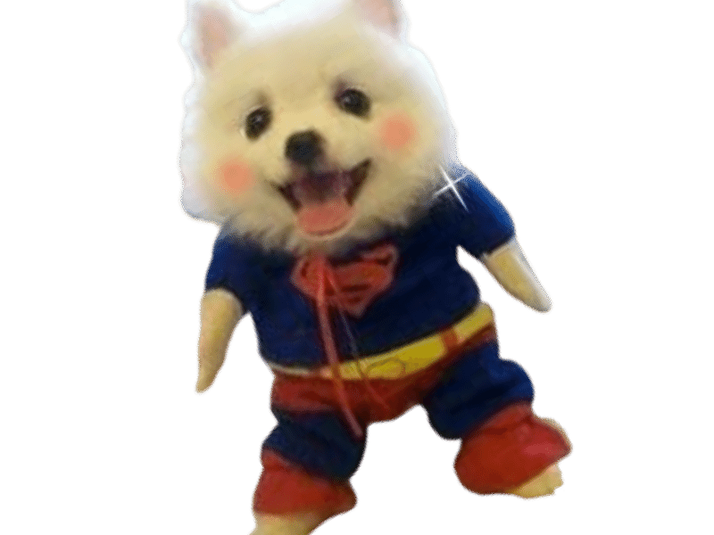 The Superman Dog Costume 10