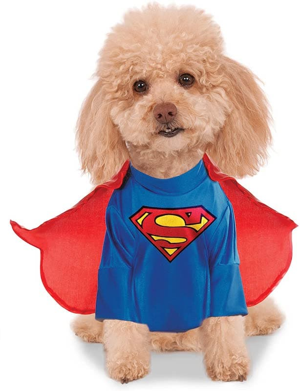 The Superman Dog Costume 9